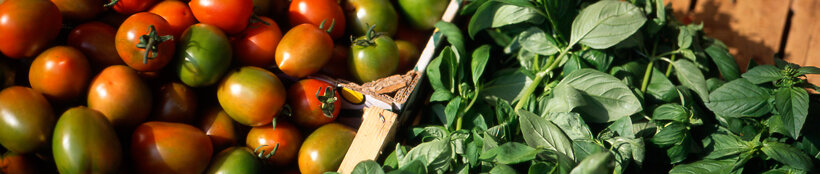 italian-farmers-market